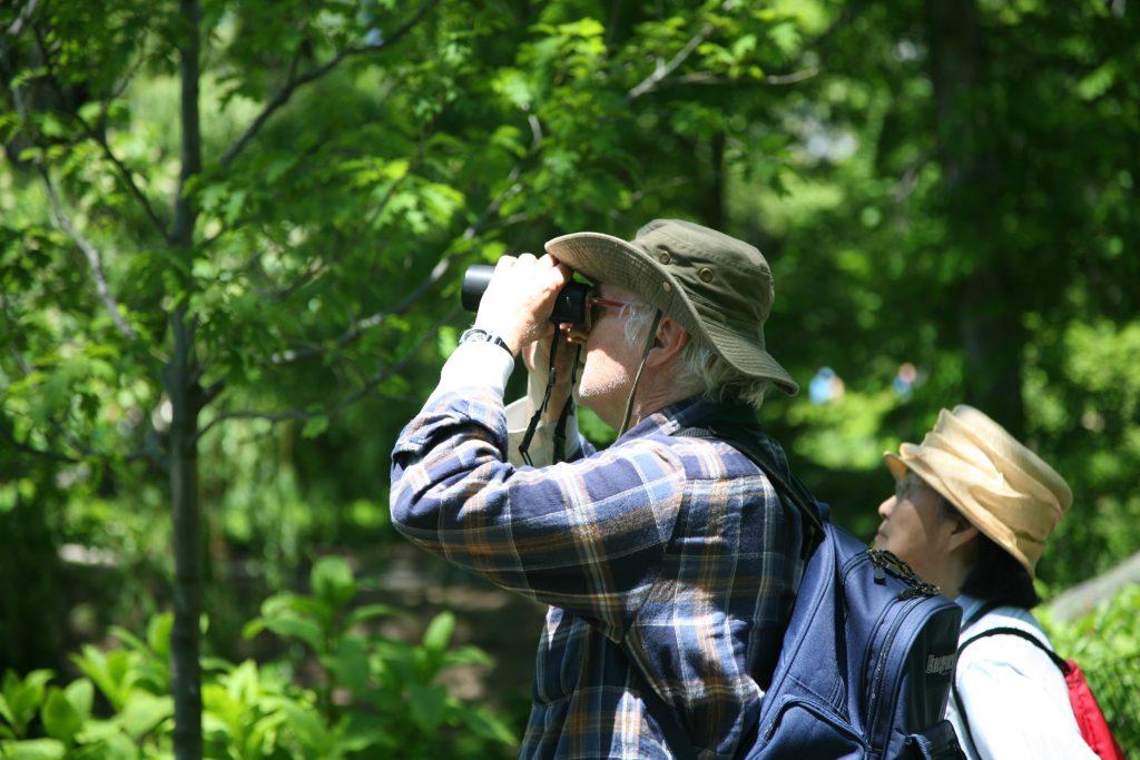 Birdwatching in Christopher Creek
