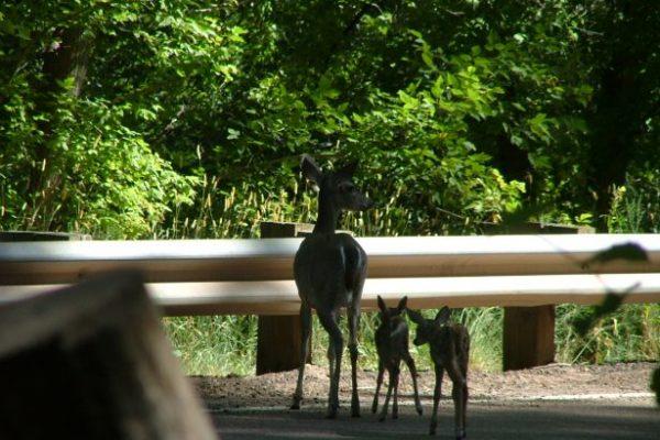 Wildlife in Christopher Creek