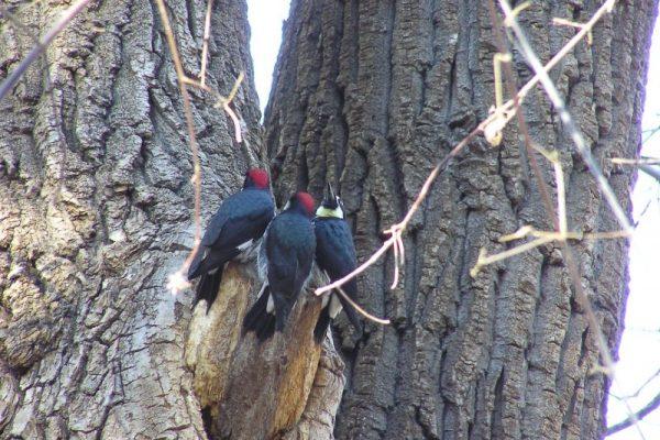 Birds in Christopher Creek